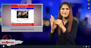 Sign 1 News with Crystal Cousineau - Groundhog wanted by police (3.24.18)