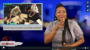 Sign 1 News with Candace Jones - Service dog gives birth to puppies in airport (5.26.18)