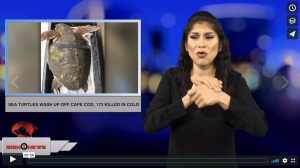 Sign 1 News with Crystal Cousineau - Sea turtles wash up off Cape Cod, 173 killed in cold (ASL - 11.24.18)