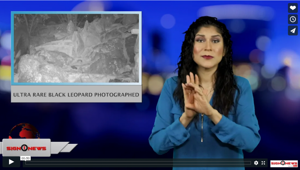 Sign 1 News with Crystal Cousineau - Ultra rare black leopard photographed (ASL - 2.13.19)